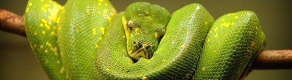 Riesgos de lo verde