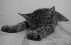 5 Minutos de descanso: tómate algunos descansos para incrementar la productividad