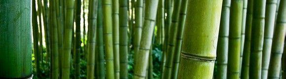dale_a_tu_vida_bambu