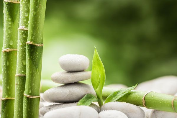 Dale a tu vida bambú