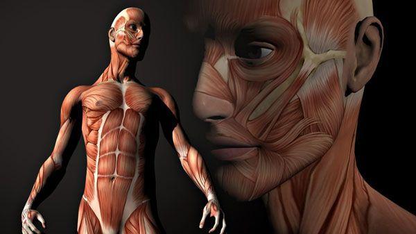 El cuerpo humano como un plano de metro