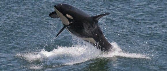 Orcas asesinas en el lugar de trabajo ¿y esto cómo lo evaluamos?