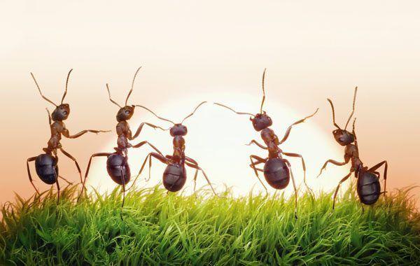 La lección de la hormiga