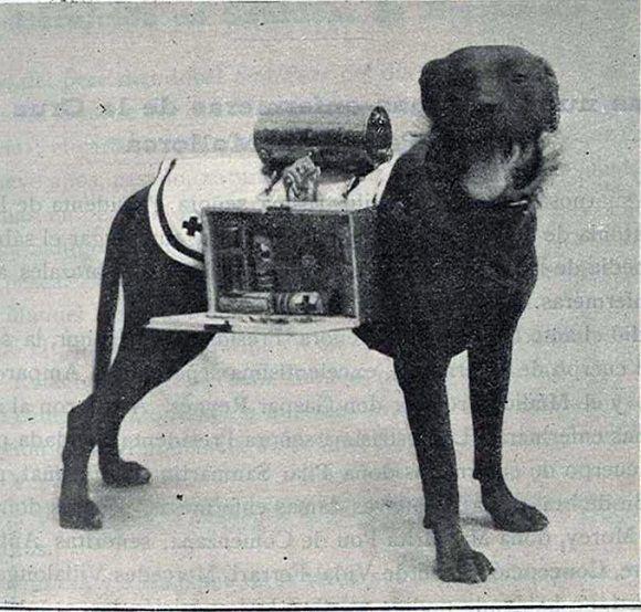 1929 Barcelona. Perro de la Cruz Roja visto en Flickr