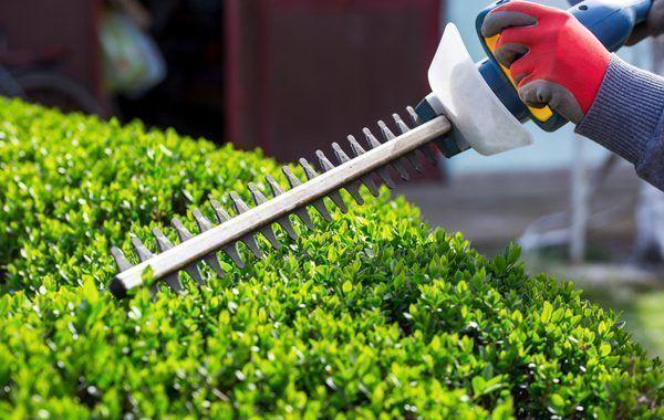 Las malas vibraciones en la jardinería