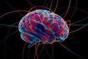 El cerebro humano tiene la llave de una inteligencia artificial más avanzada