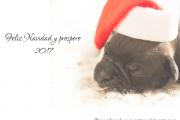 La Federación ASPA les desea unas Felices Fiestas y un Próspero 2017
