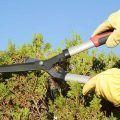 trabajadores-jardineria