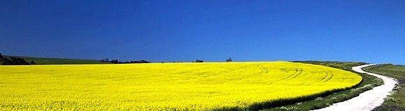 ASAJA: Manual sobre medidas preventivas y de protección de productos fitosanitarios