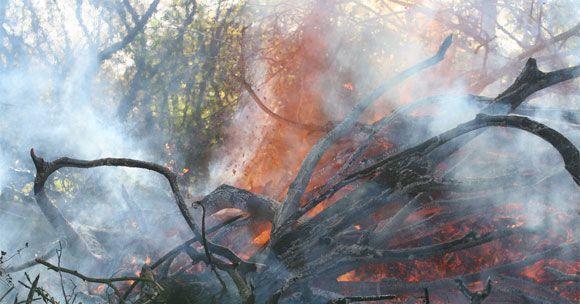 CCOO pide que la extinción de incendios forestales se incluya como actividad penosa, tóxica, peligrosa o insalubre