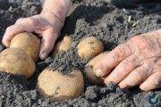 Seguridad y salud en la agricultura. Repertorio de recomendaciones practicas