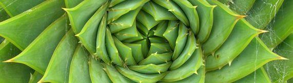 Promover la seguridad y la salud en una economía verde