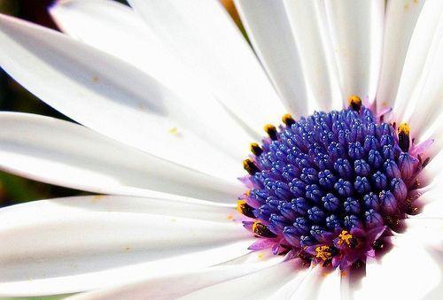 Dejar de fumar mejora los síntomas de la alergia al polen