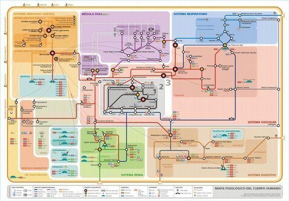 mapa_fisiologia_humana