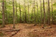 Cómo hacer mi empresa más responsable con los bosques