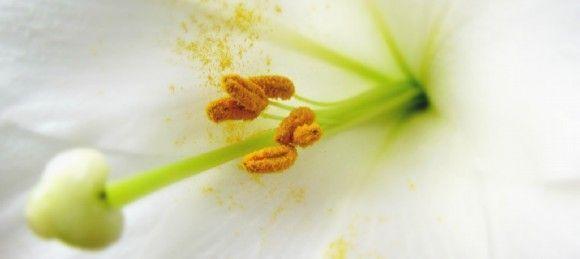 Cómo afrontar las alergias en primavera