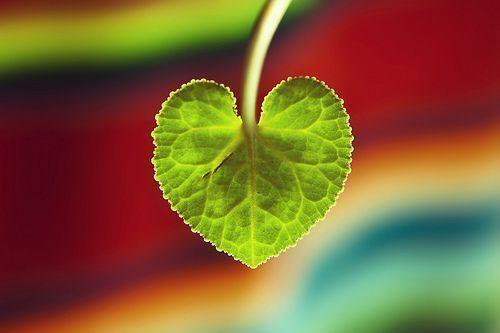 Colabora con el día Mundial del Corazón
