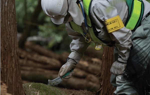 Fukushima provoca innumerables mutaciones genéticas
