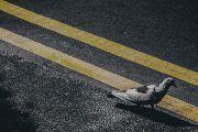 La evaluación de riesgos en la cultura preventiva: cinco hitos y una invitación