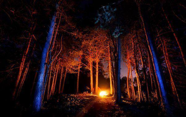 ¿Cómo acabar con los incendios forestales  en España?