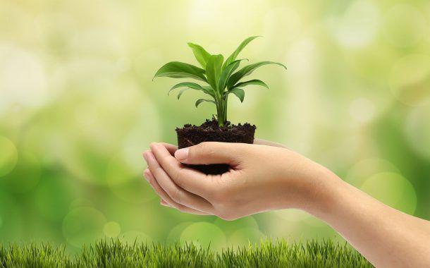 Proyecto de estrategia mundial de la OMS sobre salud, medio ambiente y cambio climático