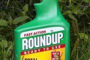 Monsanto, condenada a pagar 289 millones de dólares por los efectos cancerígenos del glifosato