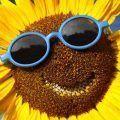 gafas-sol-verano