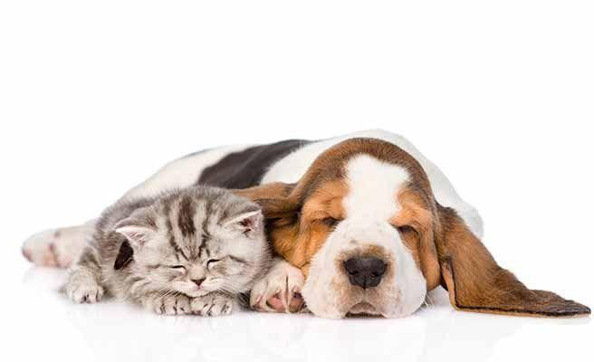 Durmiendo con su enemigo