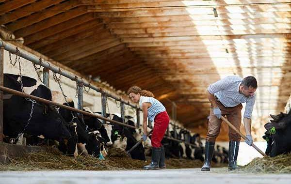 Guía para la prevención y control de la COVID-19 en las explotaciones agrícolas