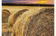 Guía de riesgos en la Agricultura y Ganadería